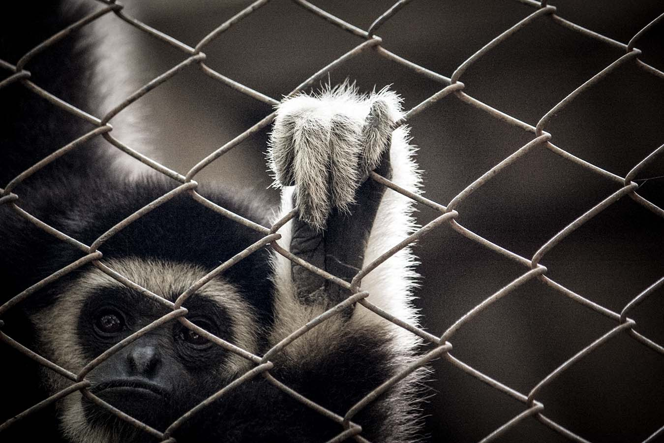 Animals behind the fence